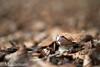 Waldspaziergang (MarcEhrmann) Tags: mushroom funghi pilze pilz steinpilz fliegenpilz wald märchen growth nikon d800 sigma photography photographer herbst autumn fall