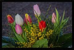 Bouquet with tulips (frankmh) Tags: flower tulip kullagunnarstorp helsingborg skåne sweden outdoor