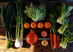 Suzie's CSA box, Week of Dec. 12 - 18