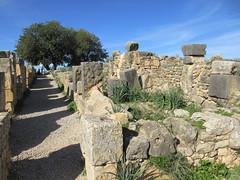 Path through the Roman ruins, Volubilis, Morocco (Paul McClure DC) Tags: morocco almaghrib fèsmeknèsregion volubilis jan2017 roman architecture historic