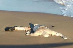 Hallan cadáver de copiloto de avioneta desaparecida en Veracruz https://t.co/E5ygljq89Z https://t.co/gts59QZsKi (Morelos Digital) Tags: morelos digital noticias