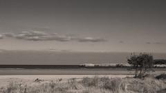 When we were giants, part 6: January at the beach (ponzoñosa) Tags: beach playa january enero cantabria oriñon sepia bn arbol tree sand arena waves olas cantábrico pasiego arbusto sky