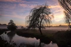 Misty (Silver Machine) Tags: winchester hampshire landscape tree sunset mist river riverbank misty fujifilm fujifilmxt10 fujinonxf18mmf2r