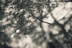 nature (b.erbel) Tags: 2017 bärbelkiffmeier januar leicaq lightroom unterwegs spaziergang