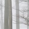 fragmenting the fog (zeh.hah.es.) Tags: acherlipass obwalden ktnidwalden oberwalden unterwalden schweiz innerschweiz switzerland nebel fog mist baum tree bäume trees äste twigs zweige stamm grau gray grey weiss white offwhite kerns