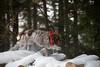 _DSC5012 (sochacki.info) Tags: szyszka griffon wirehaired pointing wpg gundog winter snow hunting dog poland sanok forest walk outside freezing
