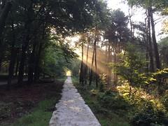 IMG_5724 (marcoderksen) Tags: mtb atb mountainbike veluwe gelderland