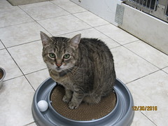 Sissy - 8 year old spayed female