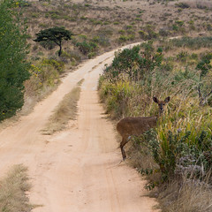 DSC08192 (gregithorne) Tags: nyanga national park zimbabwe