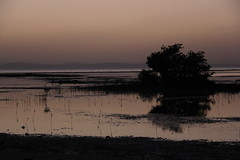 IMG_2622 (DafneCholet) Tags: park parque red sea naturaleza mountains sunrise reflections boat mar rojo holidays barco photographer natural redsea egypt el amanecer mangrove desierto egipto vacaciones sheikh sharm reflejos fotografo manglar