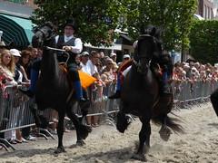 Race on Frisian horses, 2015 (Alta alatis patent) Tags: horses bareback action traditional fries paard joure frisian frysk hynder hurdrijderij