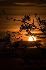 Sunset Hornisgrinde (ShimmyGraphy) Tags: sunset black tree silhouette forest germany de landscape deutschland ast branch sonnenuntergang branches natur äste landschaft schwarzwald baum hornisgrinde scherenschnitt badenwürttemberg 2015 gh4 schwarzweis seebach schwarzwaldhochstrase shimmygraphy