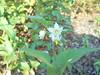 029 (en-ri) Tags: fiorellini little flowers bianco verde sony sonysti