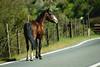 P O W E R H O R S E (Jonhatan Photography) Tags: animal caballo horse equino portro manco explorer canon chile sudamerica