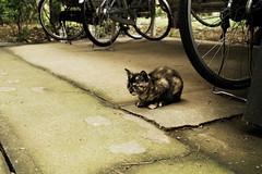 neko-neko1623 (kuro-gin) Tags: cat cats animal japan snap street straycat 猫 sigma dp2x