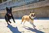IMG_1965 (megscapturedtreasures) Tags: ammo sun sunset dog beach dogs ruff days daycare