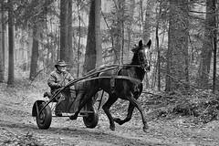 Exercise (Mr.White@66) Tags: horse bw fujifilm fuhifilmxt2 biancoenero woods boschi trees trotting noireblanc wheels hat whip