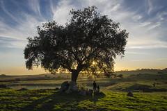 Puesta en Extremadura (pelpis) Tags: landscape loveslandscapes nature places extremadura family son father sunset sunsetlandscape lovessunset green colours people scene lifescene lovesscene