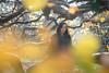 Chrisella (ecker) Tags: abendsonne baum blätter frau gegenlicht herbst licht linz natur outdoor portrait porträt umgebungslicht vordergrund zweige automne autumn autumnal autunno availablelight backlight branches fall herbstlich leafs leaves light naturallight nature otoño portraiture tree woman sony a7 fe85mmf14gm sel85f14gm