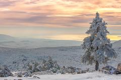 Snowfall in Athens (Alexandros Maragos) Tags: snow athens parnitha greece nature landscape mountain alexandrosmaragos αλέξανδροσμαραγκόσ αθήνα χιόνι ελλάδα attica grc