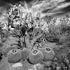Desert View (claudiov958) Tags: ngc mediumforma mediumformatdigital pentax645z landscape arizona biancoenero blackwhite blancoynegro černýabílý claudiovaldés czarnyibiały mediumformat mediumformatcamera noiretblanc pretoebranco schwarzundweiss черноеибелое pentax64535mmf35a pentaxart cactus cacti desert