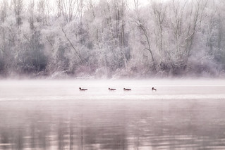 Cold dawn at the river 2