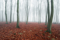 Winter Ghosts (jactoll) Tags: cutsdean gloucestershire cotswolds winter fog foggy mist misty ghost woods trees forest landscape sony a7ii zeiss 1635mm f4 jactoll