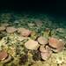 North Head Sponges 3