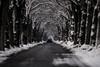 Black&white (Fotos aus OWL) Tags: kopfsteinpflaster schnee winter allee senne