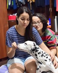 Athena ganhando petiscos s2 (porranenem) Tags: nikon dog photography 50mm bokeh lovely messyhair happy girls