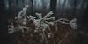 rauhreif 6136 (s.alt) Tags: frost detail frozen eiskristall icecrystal frozennature nature natureunveiled winter ice rauhreif cold kalt morgen kristallförmig vereist niederschlag hoarfrost whitefrost rime frostyrime macro