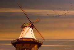 Mühle Amanda in Kappeln.jpg (Knipser31405) Tags: frühjahr windmühle schlei kappeln 2016 angeln schleswigholstein deutschland de