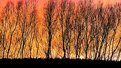 Sunset behind the trees, the sky is on fire! (eucharisto deo) Tags: sunset afterglow tree trees sence valley park instantfave