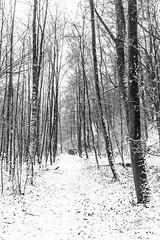 way to the cold (piri198) Tags: eos eosm eosm10 canon bw black white schnee snow schwarzweiss wald forest weg way bäume trees lightroom6 lightroom 22mm düster