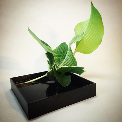 Ikebana using only leaves