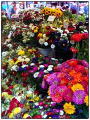 Les fleurs de Vannes marché (Rockman of Zymurgy) Tags: france fleur fleurs breizh bouquet britanny vannes breton 2013
