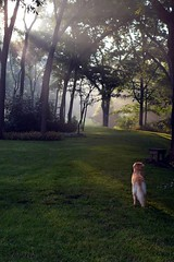 Early morning with Auggie (janeav) Tags: sunlight nature goldenretriever outdoor kansas lightthroughtrees mistymorning earlymorningsun