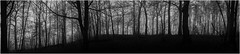Haigh, Wigan woodland (Pitheadgear) Tags: haigh wigan wiganborough haighcountrypark haighplantations haighhall landscape alandavies nature lancashire uk britain leicaq leica