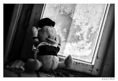 abandoned 20yr ago (Aljaž Anžič Tuna) Tags: 212 212365 365 duck window ice winter placeofmurder abandoned spyder photo365 project365 portrait onephotoaday onceaday old d800 dailyphoto day dof 35mm 365challenge 365project monocrome monochrome nikond800 nikkor nikkor85mm nice naturallight 85mmf18 f18 bw blackandwhite black blackwhite beautiful white doll duckdoll stuffedduck stuffer plush murder