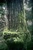 """old bone"" (camerito) Tags: tree trunk baumstamm interesting interessant forest wald wunde wound camerito nikon1 j4 austria österreich flickr"
