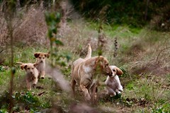 Capua, Italy (JonMarti) Tags: farm farmdog canon 70d orchard pasture italy capua bone playing nature field fetch chase child mother dog puppies puppy