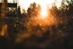 Moment of silence (thethomsn) Tags: moment silence sunset ground bench leaves autumn winter december wood forest nature outdoors flare backlit goldenhour blurry focus dof grass plants germany explore