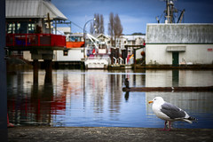 The Seagull at Steveston Fisherman's Wharf in Richmond BC Canada (TOTORORO.RORO) Tags: bc canada greatervancouver britishcolumbia richmond vancouver view light travel reflections steveston village fishermanswharf boat port harbour fisherman tourist tourism popular visitor attractions lifestyle fishing walking winter