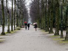 Düsseldorf - Hofgarten - rainy day (KL57Foto) Tags: deutschland düsseldorf europa germany hofgarten jahreszeitenundwetter kl57foto kontinente landeshauptstadt landschaften nrw natur nordrheinwestfalen olympus park regenwetter winter rainyday schirme