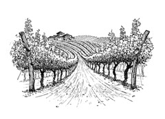 "Vineyard Illustration for wine label • <a style=""font-size:0.8em;"" href=""http://www.flickr.com/photos/64357681@N04/18576482636/"" target=""_blank"">View on Flickr</a>"