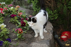 1. Cat / котик