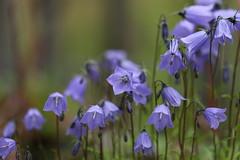 (Erwin Hondebrink) Tags: flower macro nature canon outdoor natuur bloem