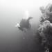 [DSAC: Diving Summer Isles 2015]