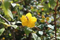 IMG_4611 (cheryl's pix) Tags: california flowers flower berkeley botanicgarden botanicalgardens botanicalgarden botanicgardens berkeleyca berkeleybotanicalgarden ucbotanicalgarden universityofcaliforniabotanicalgarden universityofcaliforniabotanicalgardenatberkeley