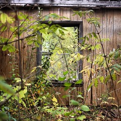 (AndruForTheWin) Tags: abandoned window nature overgrown outside outdoors adventure explore overrun abandonedworld